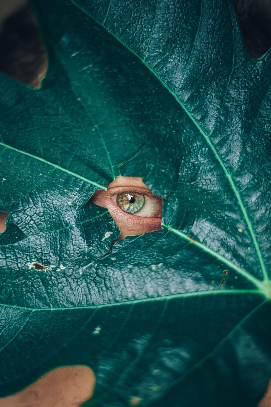 green large leaf covering human eye